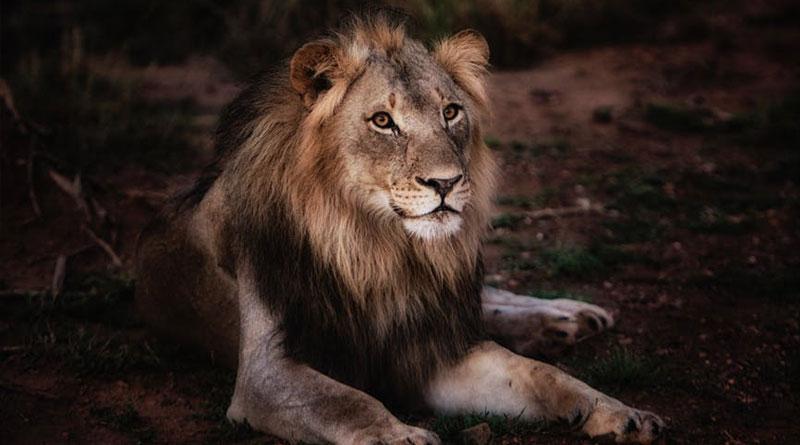5 Best Insider Tricks to Help Wild-Animal