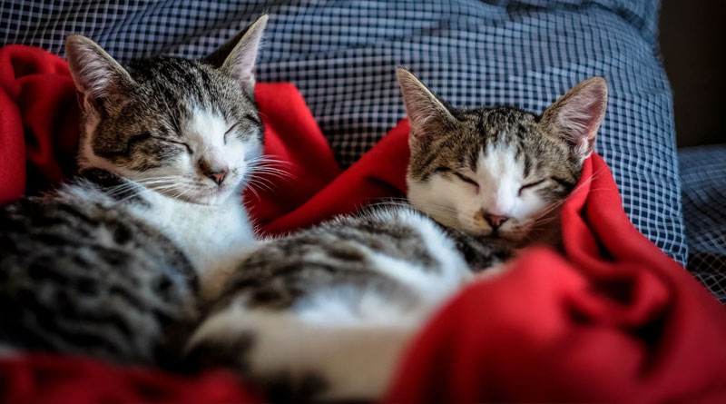 Cats may have 'attachment styles' that mirror people's
